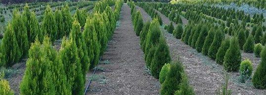 Süs Bitkileri Üretim ve Satışı - Tekirdağ